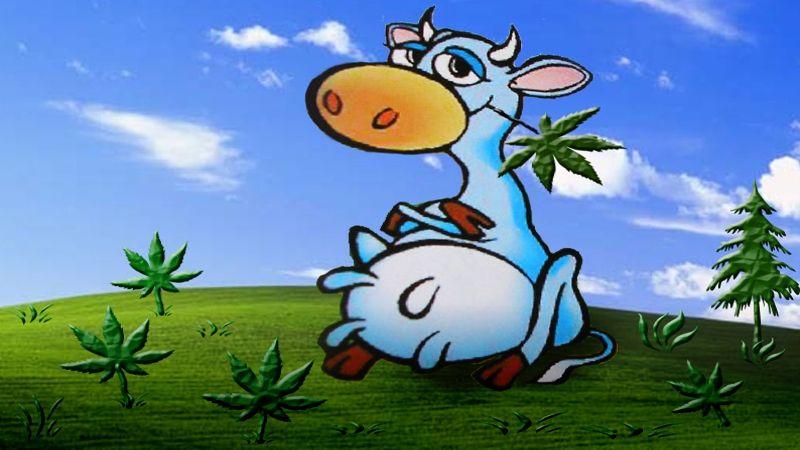 веселая корова картинки